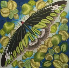 My Rajah Brookes Birdwing Butterfly From Millie Marottas Curious Creatures Find This Pin And More On Adult Coloring Book