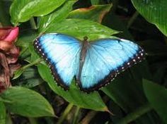 butterfly image - Pesquisa do Google