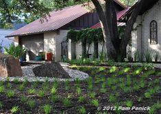 Texas Sedge lawn - nice bunch grass lawn alternative - water wise