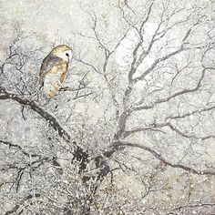 Barn Owl - christmas card design by Jane Crowther for Bug Art greeting cards.