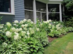I love the lush flowers of hydrangeas both in the garden and in bouquets  for the house. As a novice gardener, I had mixed success with growing  hydrangeas and getting them to bloom every year. There are dozens of  tantalizing hydrangea varieties, and the key was finding the best ones for  my mid-Massachusetts location.  Planting several types of hydrangeas ensures color in your garden from June  through October. Here are the hydrangeas that are blooming in my garden  right now:  Hydrangea…