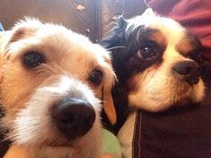 Charlie (dad) and mustard (daughter) selfie