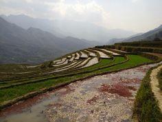 Rizières au village de Hau Thao.