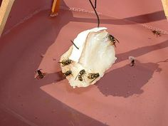 AOJ Outdoors Tip - Eliminate Yellow Jackets With This Non-Toxic Homemade Yellow Jacket Trap!