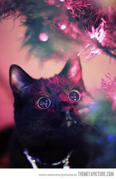 Cat's Christmas photo