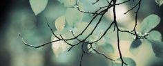 http://tipova.blogspot.com/ Ветка, листва, зелень