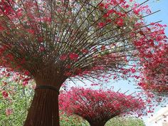 Bougainvillea growing over constructs made of reinforcing bars. Cold weather has caused leaves to fall so we can see the structure.
