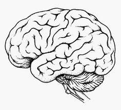 Human Brain Diagram - Labeled, Unlabled, and Blank ...