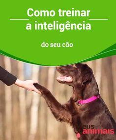 Treinar a inteligência do seu cão é mais fácil do que você imagina É possível melhorar as habilidades cognitivas, emocionais e sociais dos cães, o que, no final, os ajudará a serem bem-educados e a preservar a saúde física e mental deles. Há muitos brinquedos e atividades para ajudar a treinar a inteligência do seu cão.