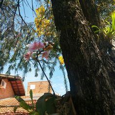 Orquídea e Ipê