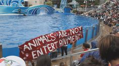 Boycott seaworld, they mistreat dolphins and whales