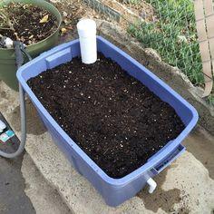 Una técnica que te permitirá mantener húmedas tus plantas y cultivos en macetas sin muchos cuidados, y ahorrando gran cantidad de agua.