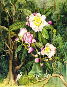 Olímpia Reis Resque: Viajantes: Que dia delicioso! Comentário de Charles Darwin (1809-1882) sobre a alegria que sentiu ao entrar numa floresta brasileira pela primeira vez. Ilustração de Margaret Mee (1909-1988). No Blog!