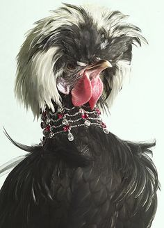 Bejeweled exotic chicken, by Peter Lippmann