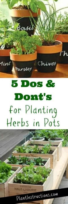 5 Dos and not for planting herbs in containers - Garden plants - Beautiful Garden Types - Beautiful Garden Types Garden Types, Garden Care, Growing Plants, Growing Vegetables, Growing Herbs In Pots, Regrow Vegetables, Container Plants, Container Gardening, Succulent Containers