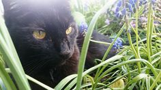 My old boy with a beauty pic