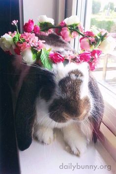 Bunny celebrates Midsummer with a flower crown - August 29, 2014