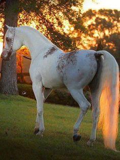 #HORSE##PETS##CUT#