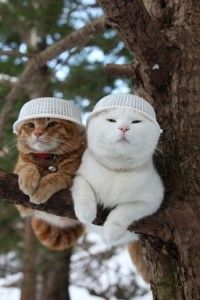 Two funny cats sitting on the tree wearing plastic caps