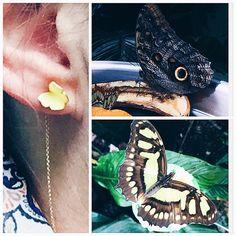 Når man besøger tropehuset i ZOO... #butterflytwins #earrings #øreringe #guld #sommerfugle