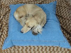 Hey, I found this really awesome Etsy listing at http://www.etsy.com/listing/80907458/favorite-blue-jeans-dog-pillow-dog-bed