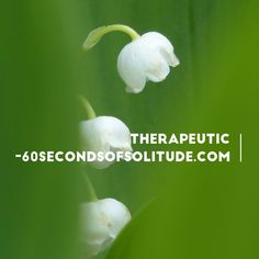 Today's mindfulness meditation word is therapeutic. Listen to 60 Seconds of…
