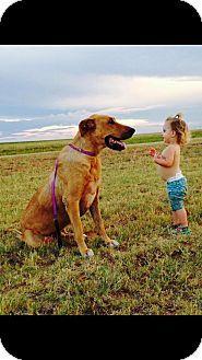Denver City, TX - Great Dane Mix. Meet Mick, a dog for adoption. http://www.adoptapet.com/pet/15309274-denver-city-texas-great-dane-mix