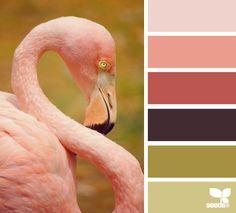 flamingo hues