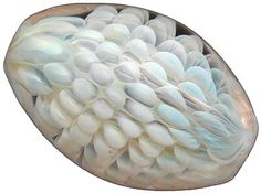 John Olsen beads in Larkspur Colorado Love his beads Sea Snail, Snail Shell, Decorative Objects, Decorative Bowls, Larkspur Colorado, Creative People, Olsen, How To Make Beads, Lampwork Beads