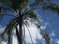 Ibis in a palm tree by PleasantlyKooky on Etsy, $15.00
