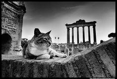Cat And Roman Ruins