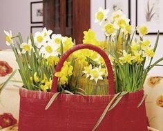 kuhles stiefmuetterchen die sympathischen fruehblueher inserat bild oder dbbfacaadafecab spring flower arrangements spring flowers
