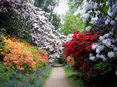 Down Middle Walk of Leonardslee Gardens in West Sussex, England. Leonardslee Gardens, considered by many to be 9 miles of the most beautiful English garden paths in the history of the universe, was...