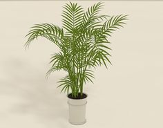 Areca Palm plant pot 3D Model