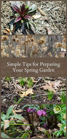 Learn a few simple tips about preparing your spring garden, including clean up, pruning, dividing and moving. Also includes tips from six other gardeners.