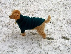 Both small and large dogs get cold in the snow of winter or the mists of autumn and spring. Exercise your crafty skills by knitting your dog a sweater. To knit a sweater, you must know how to execute the knit stitch and purl stitch. You should also know how to cast on, bind off, increase and decrease. This is a simple tube-style sweater with sleeves to cover the dog's front legs. It is economical, with a small- to medium-sized sweater requiring 130 to 260 yards of yarn, or about one to two…