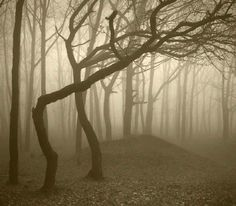 Haunted Hoia Baciu Forest (Romania) - The Hoia-Baciu Forest is 250 hectares large and known as the Bermuda Triangle of Romania. The world's most haunted forest has a reputation for paranormal activities and unexplained events. Most Haunted, Haunted Places, Landscape Photos, Landscape Photography, Hoia Baciu Forest, Maleficarum, International Photography Awards, Haunted Forest, Bermudas