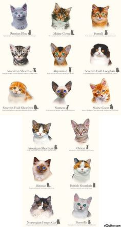 Cat Breeds - Cluster of Kittens