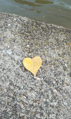 #fall #love #autumn #leaf #yellowleaf #heart #wallpapar  ©vbphotography