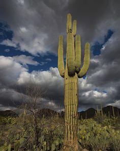Saguaro Storm by mikes nature, via 500px; Saguaro National Park, Arizona