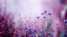 ... Soft Flowers Delicate Beautiful Photography Flower Wallpapers Mac ...
