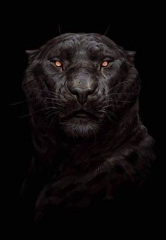 Beautiful Science Fiction, Fantasy and Horror art from all over the world. Dark Wallpaper, Animal Wallpaper, Black Panther Cat, Wildlife Art, Creature Design, Tattoo Studio, Big Cats, Animal Drawings, Cat Art