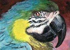 ACEO Original Painting Macaw bird animals wildlife feathers fly colorful plumage #Impressionism
