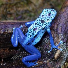 Poison Dart Frog ~ clearly, you can't tell by looking! #PersonalLeadership @Marsha Penner Crowe