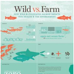 Salmon: Wild vs. Farmed - How wild and cultivated salmon impacts our health and the environment