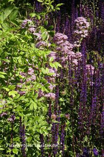 Echium candicans in jardin botanico barcelona tuinvrouw for Jardin wilson nice