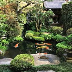 How beautiful is this small Japanese garden 🏯 In the past, we featured the same garden several times. Japanese Garden Landscape, Small Japanese Garden, Japanese Garden Design, Japanese Koi, Japanese Garden Backyard, Japanese Gardens, China Garden, Japan Garden, Backyard Water Feature