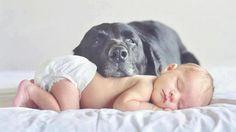 i m just a sleeping guard HD Wallpaper - (#29641)
