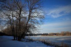 Blue Sky, Bare Tree
