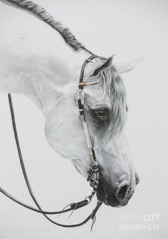 Grey Horse Print featuring the pastel Sterling by Joni Beinborn